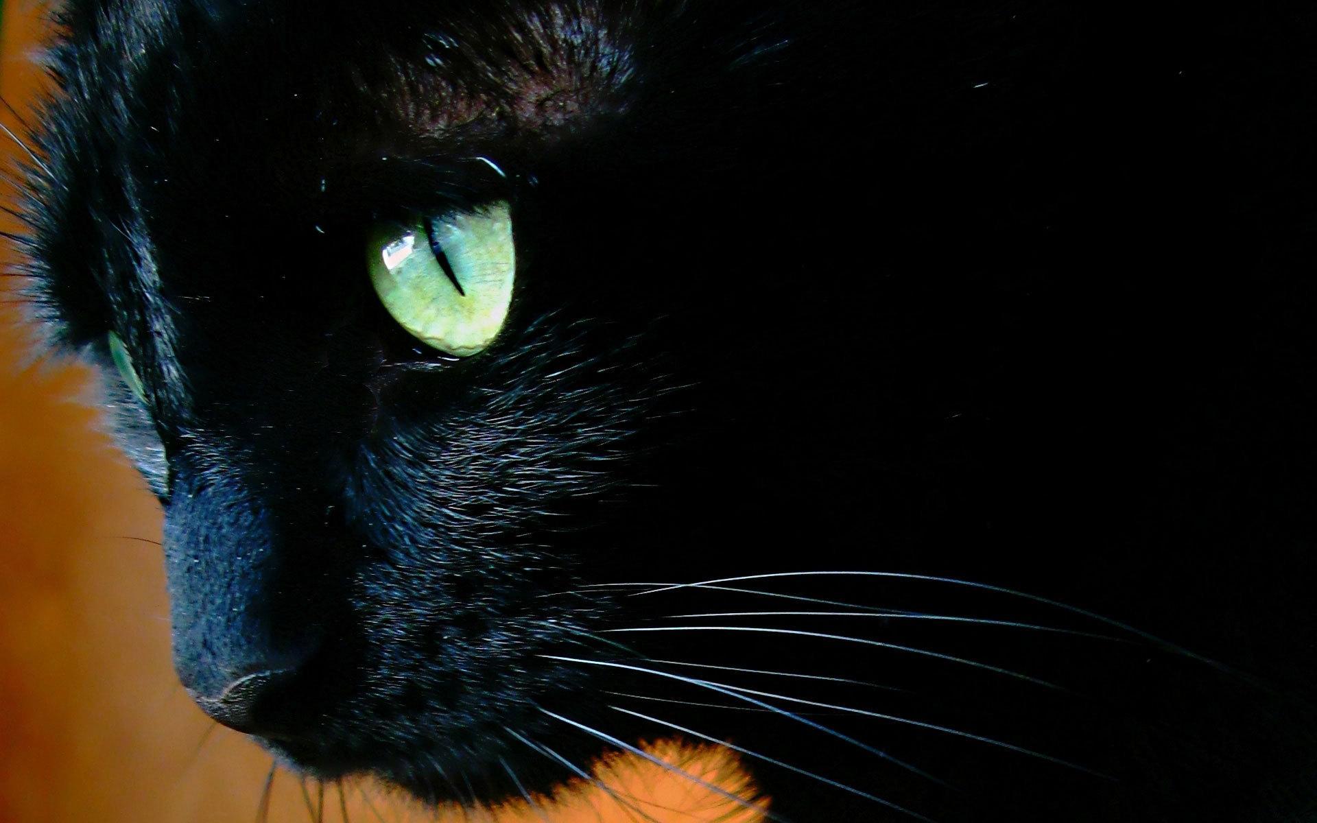 обои на рабочий стол черная кошка с зелеными глазами № 174227 загрузить