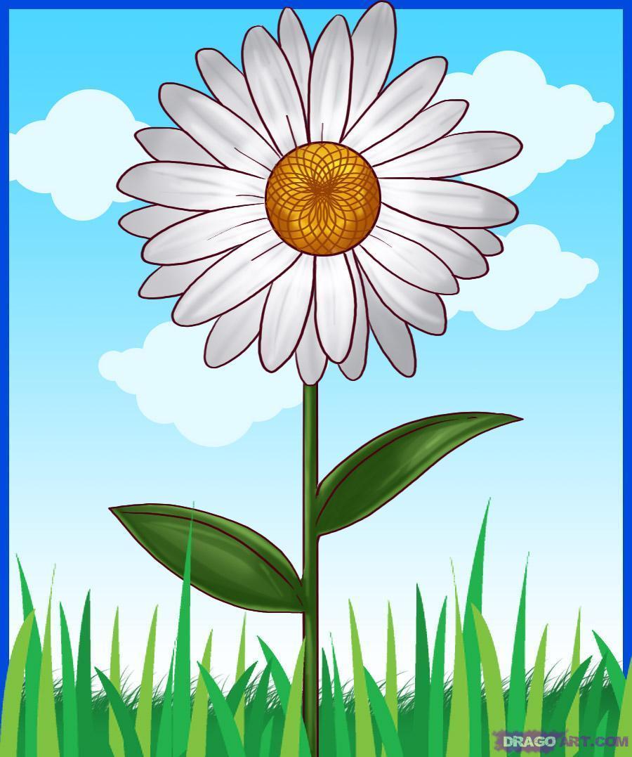 Картинки цветы ромашка для детей, вертикальные юбилеем