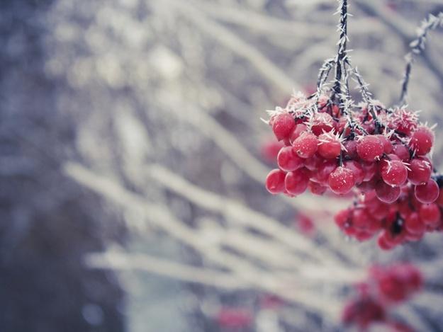 природа мороз рябина зима ветки еда ягоды  № 457164 загрузить