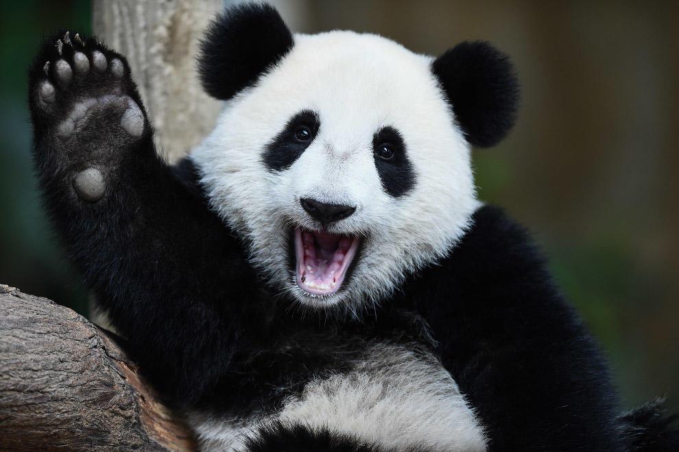 Панда и помада