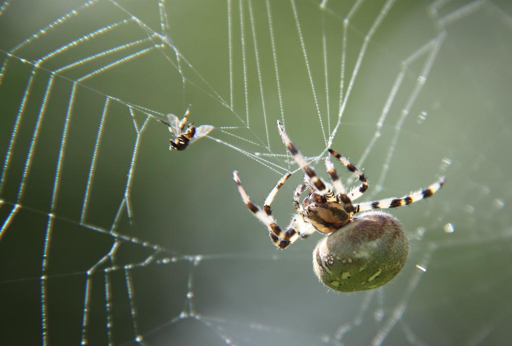 Картинки пауков и мух