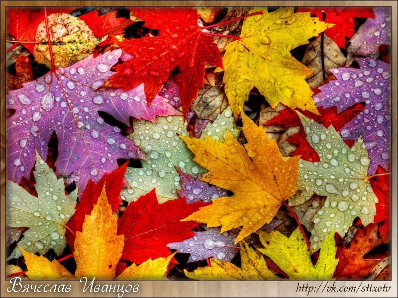 По зелёной траве, рассыпая пожухшие листья...