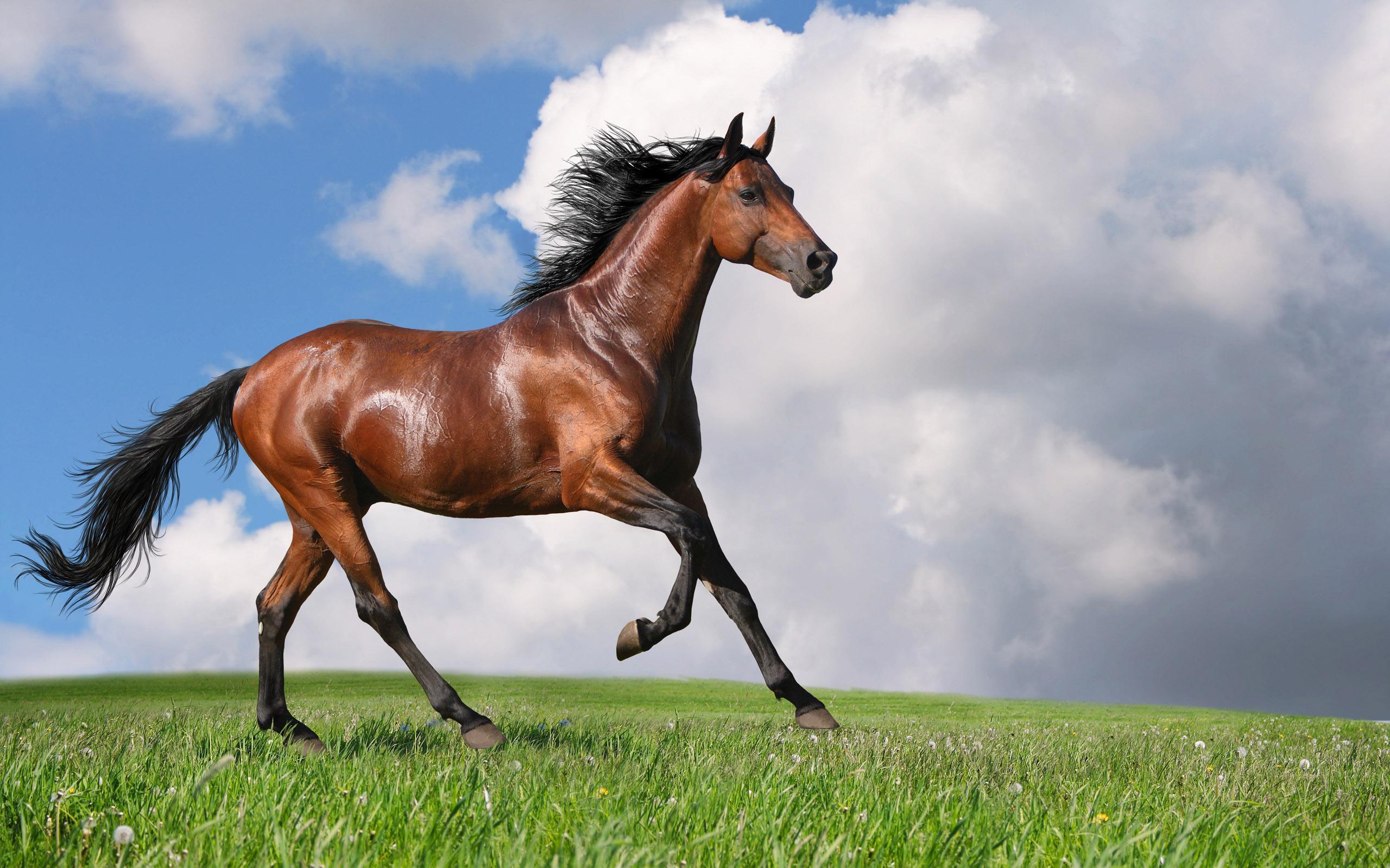 عکس مشروب اسب سفید