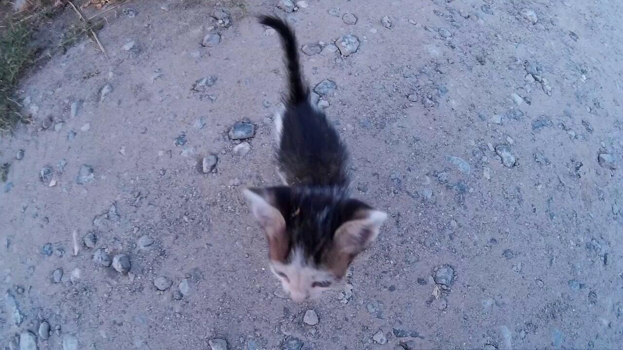 Котёнок  на улице