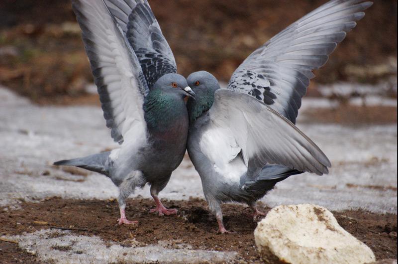 показать фото про голубых