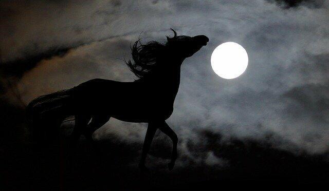 Мир - где всадники гонят себя без коней