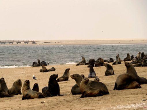 Тюлени Шотландии атаковали рыбака