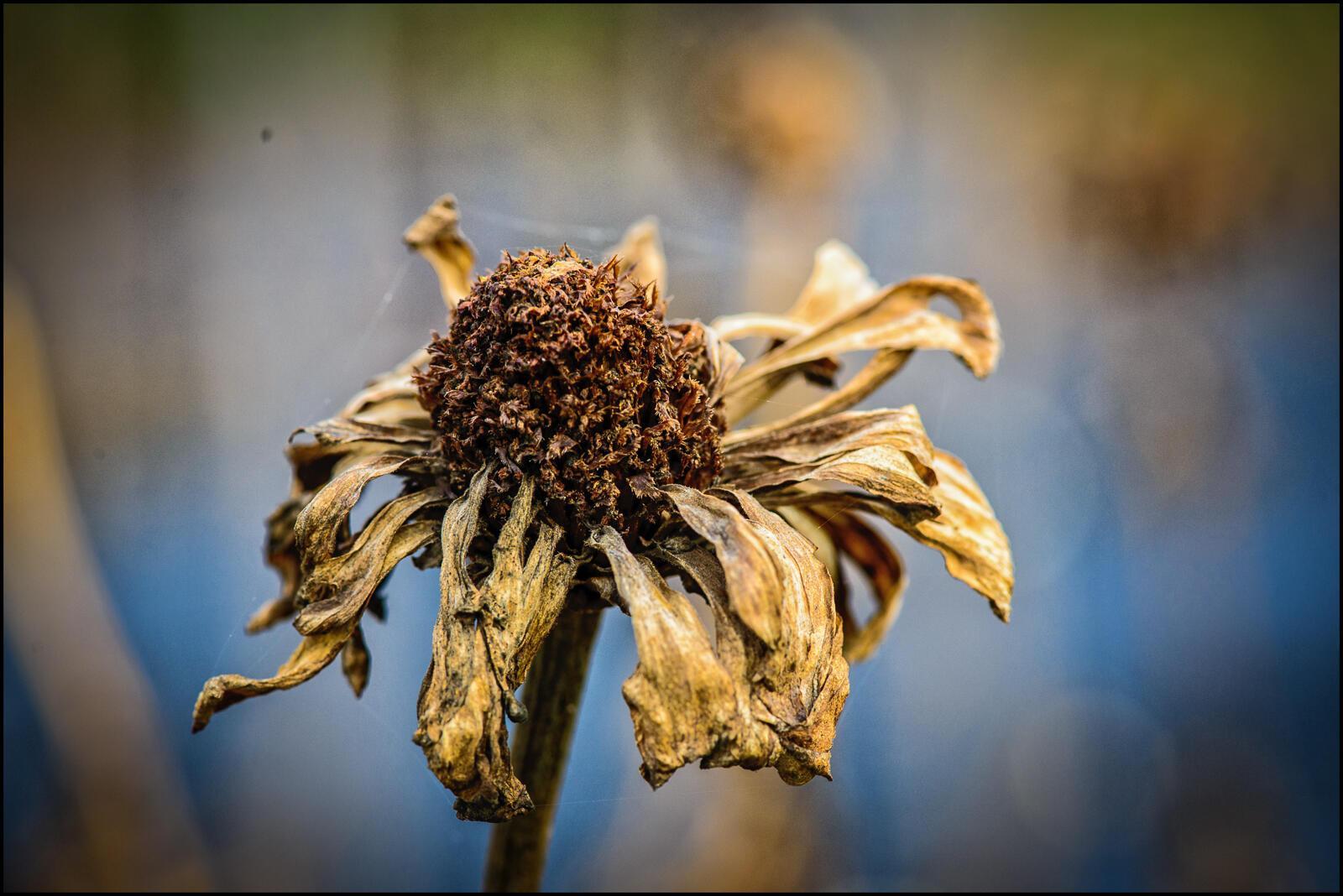 фотографии цветы завяли также использовать осколок
