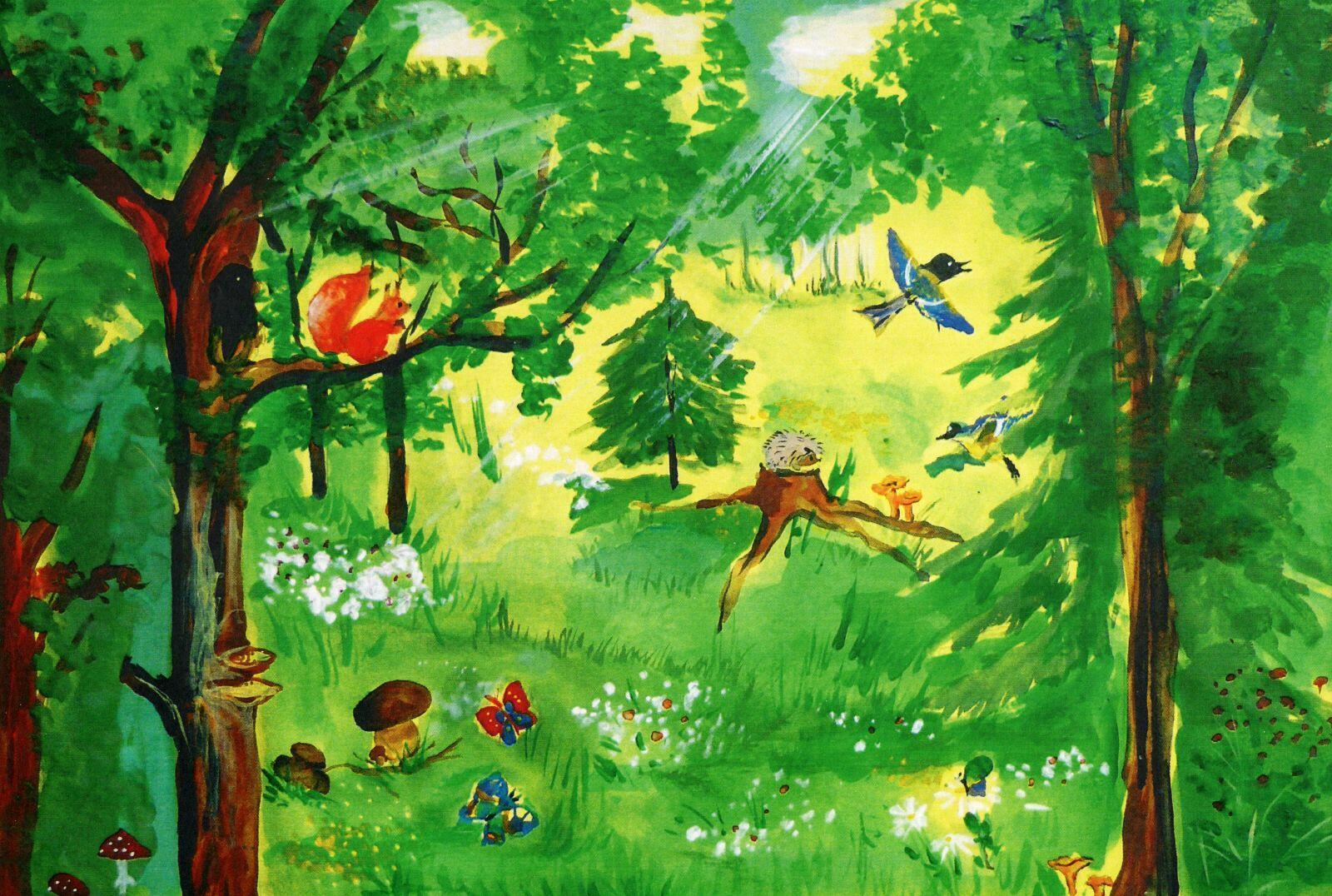 Летний лес картинки для детей