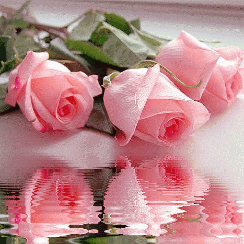День, анимированная открытка с розами