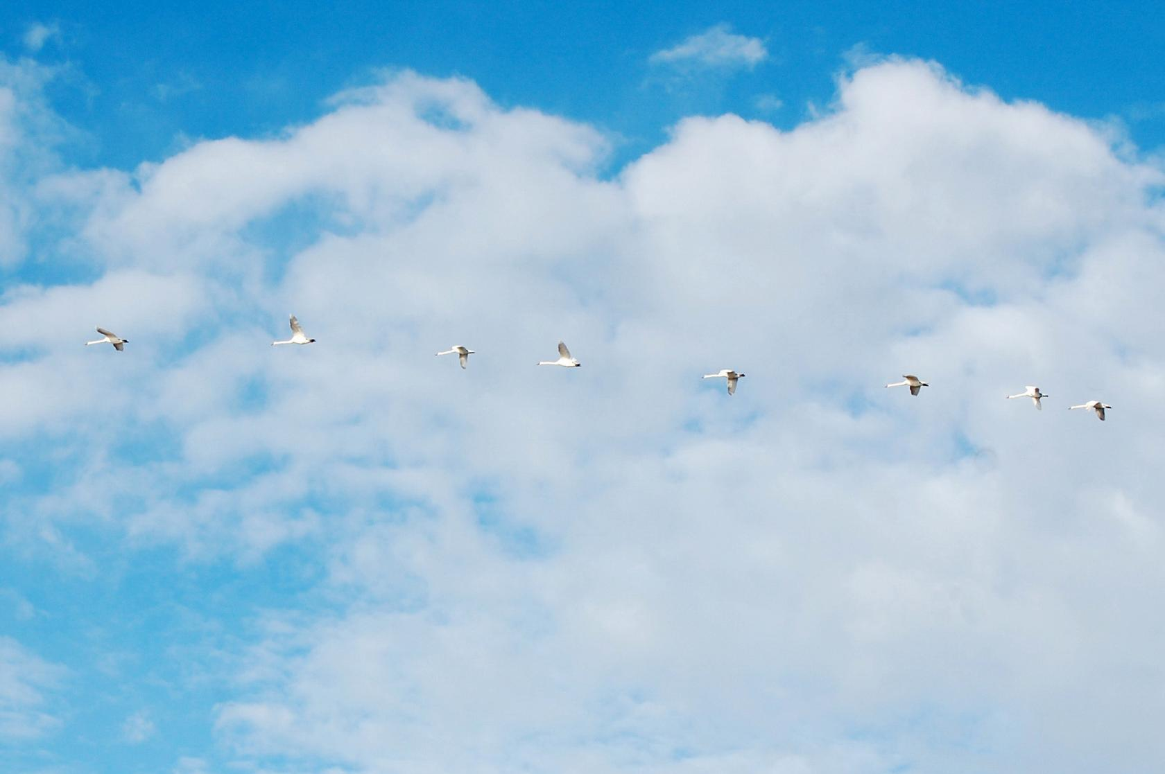 Картинки, картинки журавлей в небе