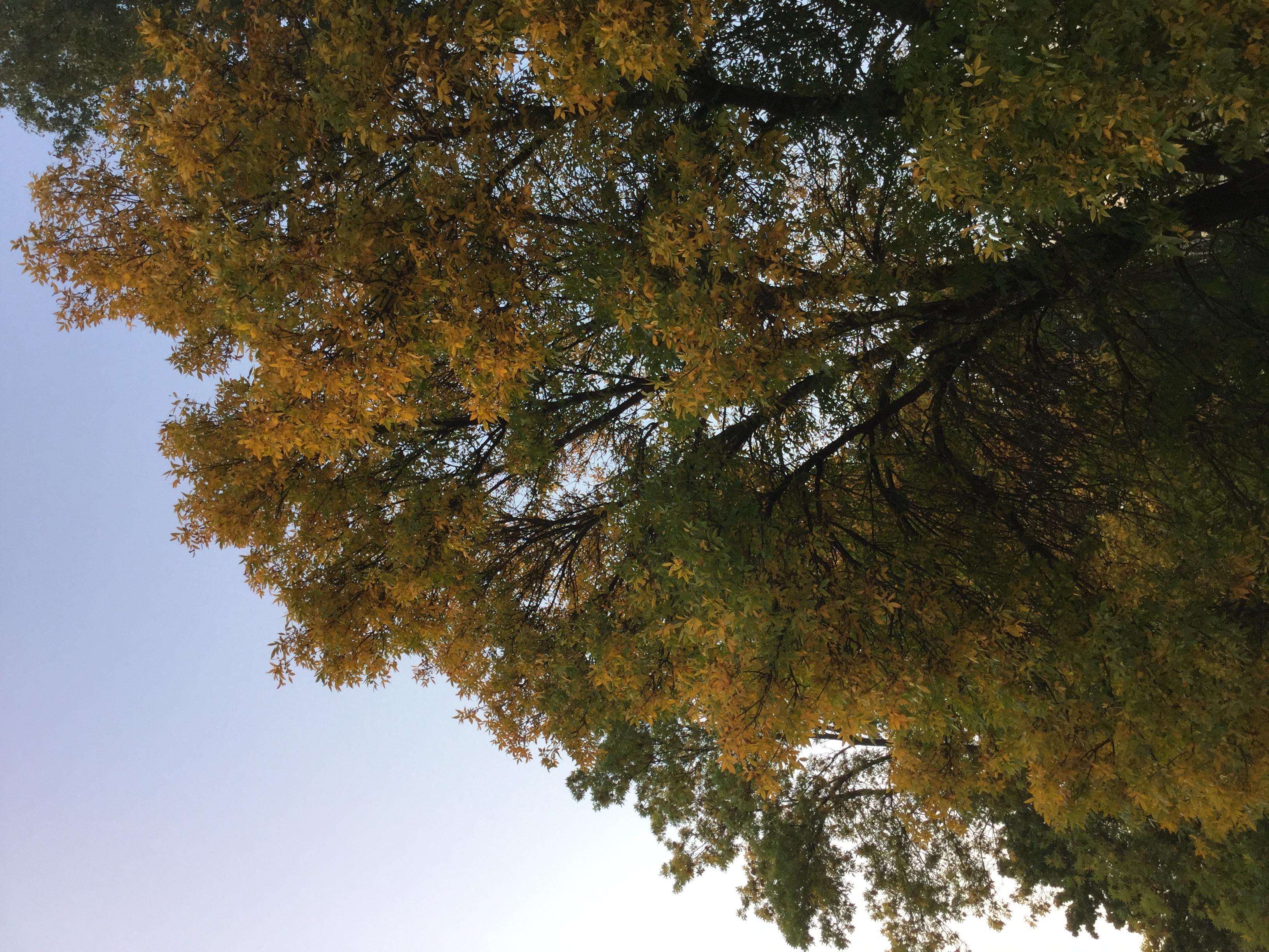 Всё сказала осень