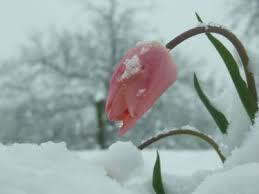 Забытый снег