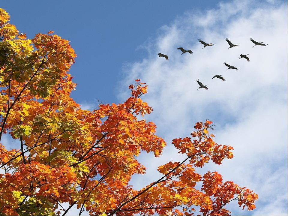 приобрел, вот картинки осень стаи птиц вертикальные бумажного