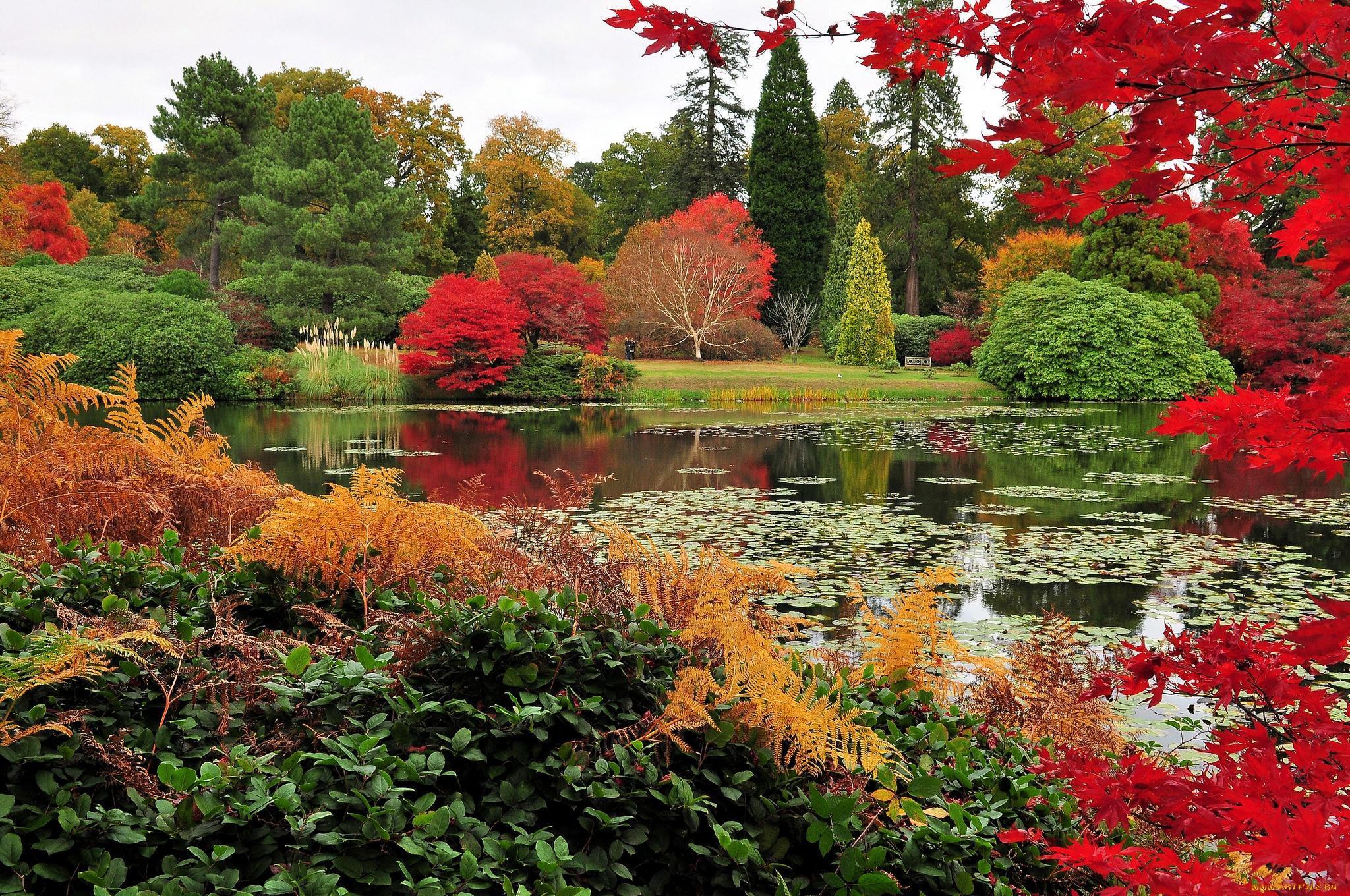 красивый осенний сад фото