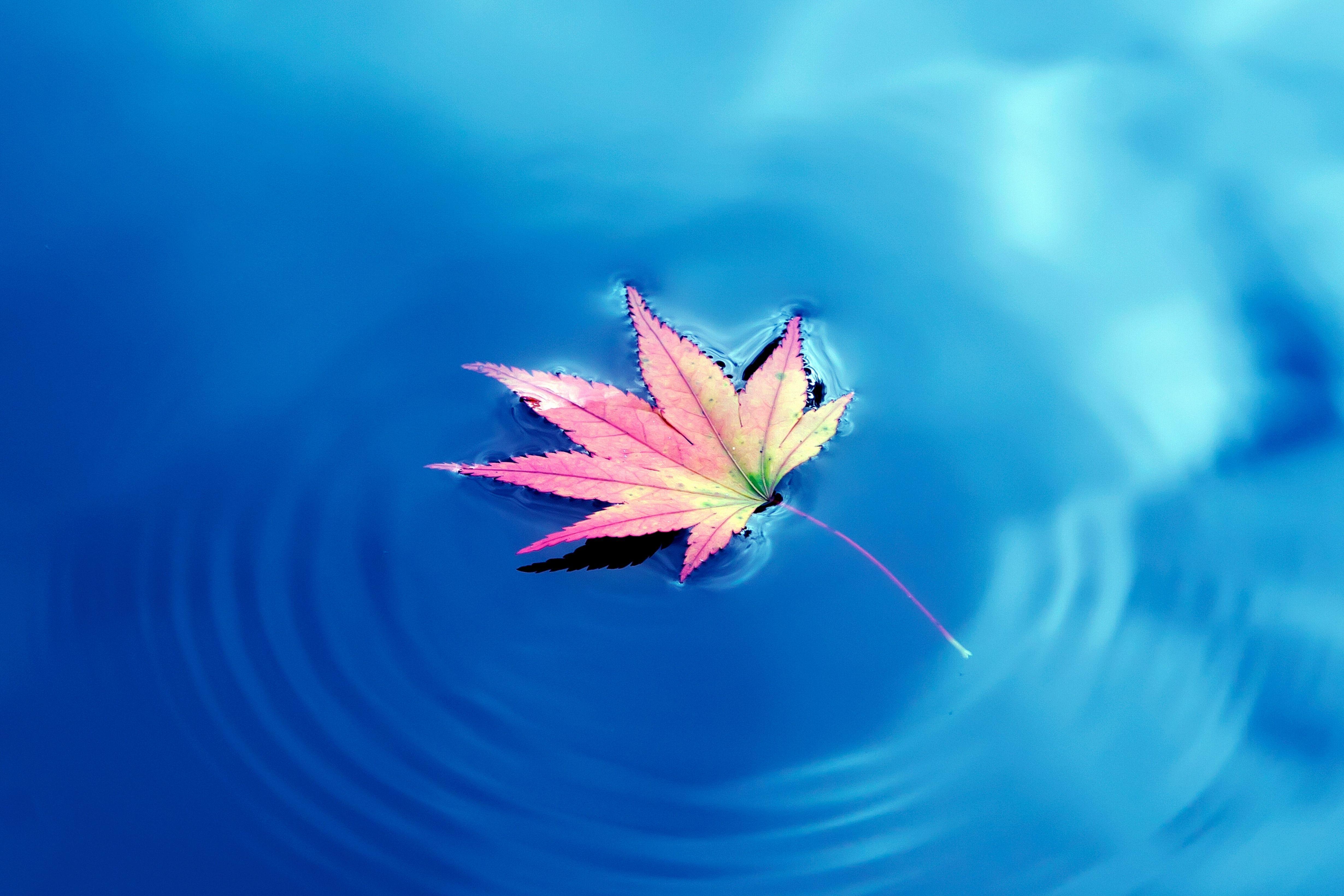 Обои для рабочего стола листья на воде