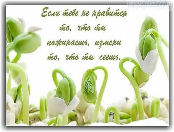 https://s.poembook.ru/theme/fa/cd/9f/e5112a1ea5be495c5340b9690d2ad3ddfc075cf2.png