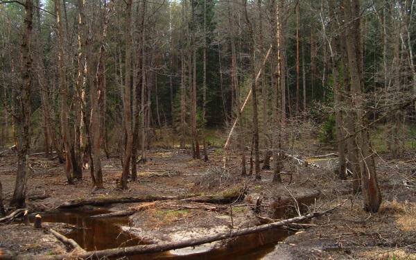 голая в осеннкм лесу фото