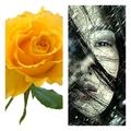 Поэт Алина Ким, стихи которого вы можете прочитать в поэтической социальной сети Поэмбук.