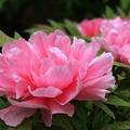 Elvie flower