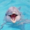 Поэт Весёлый Дельфин, стихи которого вы можете прочитать в поэтической социальной сети Поэмбук.