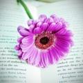Поэт Атабаева Ирина, стихи которого вы можете прочитать в поэтической социальной сети Поэмбук.