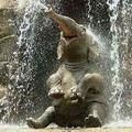 Поэт Улётный Слон, стихи которого вы можете прочитать в поэтической социальной сети Поэмбук.