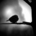 Поэт Кира Стриж, стихи которого вы можете прочитать в поэтической социальной сети Поэмбук.